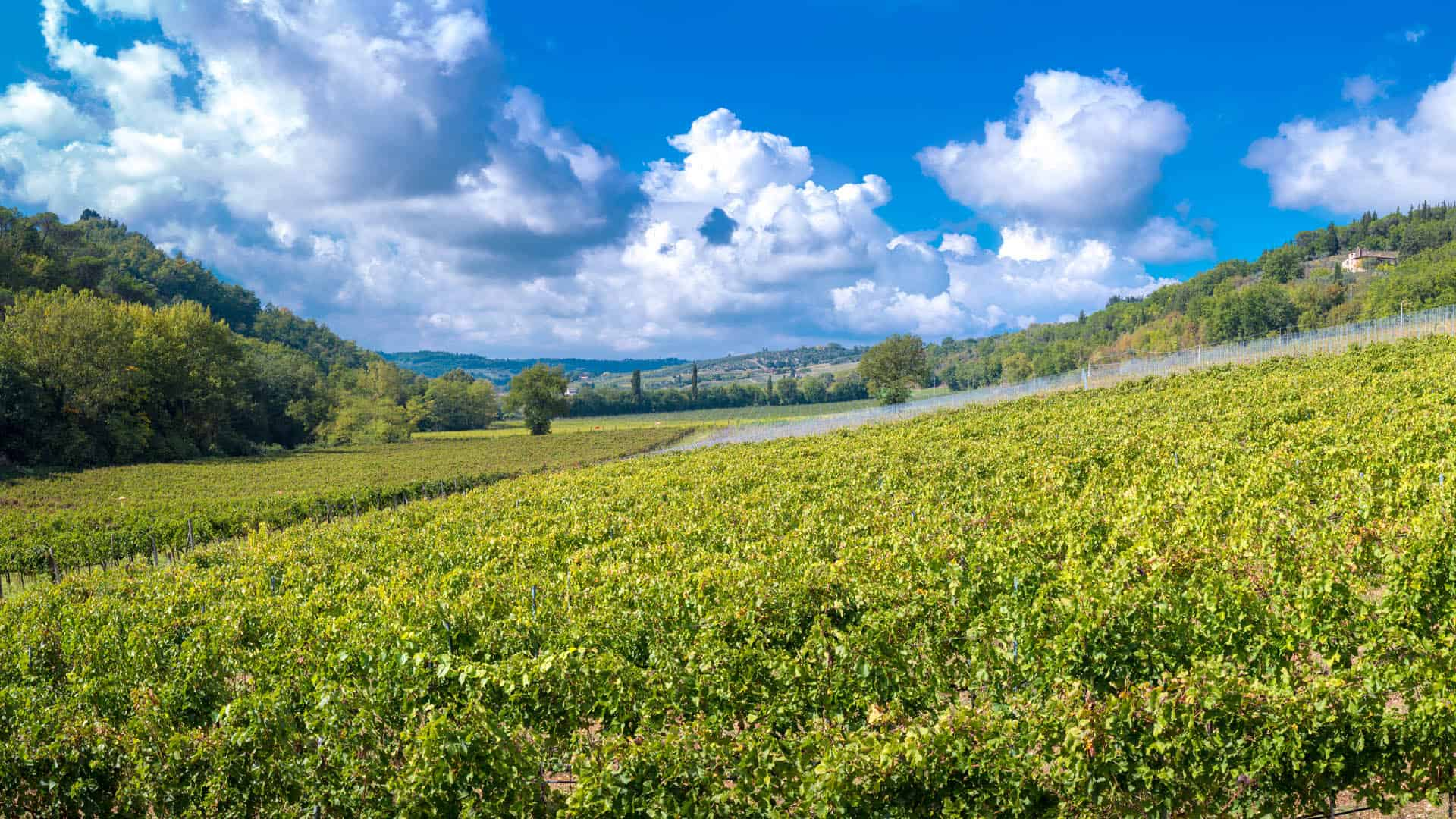 Vigna Carus Vini Toscana Slide